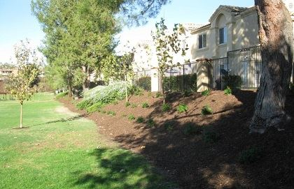 Peachwood Park maintained garden beds in front of house
